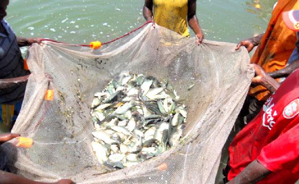 Fishery@Mandevu